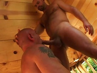 inflexible gay bear gives dick sucking to his